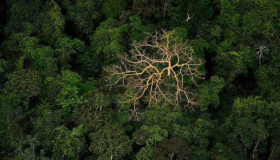 Honduras : Jungles & rain forests in Honduras cover overall 4,648,000 hectares area which is around 41.5% of the total land area of the country. The country faces an annual change in their forest cover area around 156,400 hectares and it's due to deforestation.